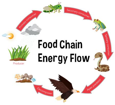 Ilustración de diagrama de flujo de energía de la cadena alimentaria