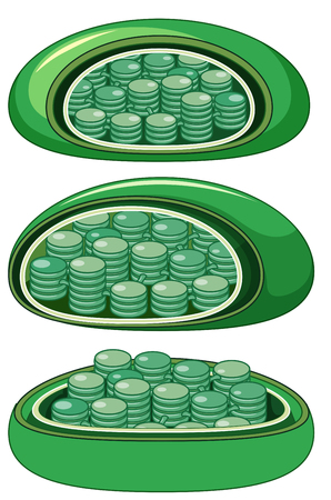 Different view of magnified plant cells illustration