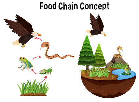 Science Food Chain Concept illustration Stock Vector - 103619488