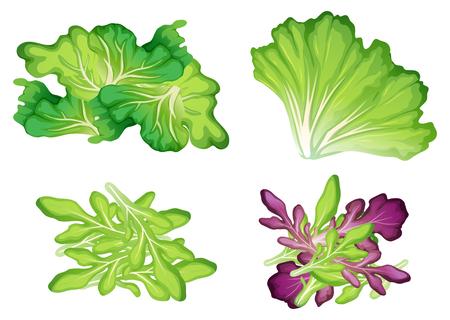 A Set of Leaf Vegetable illustration