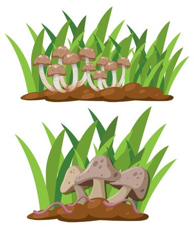 A Set of Mushroom in Nature illustration