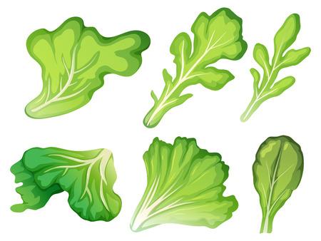 A set of salad leaf illustration Illustration