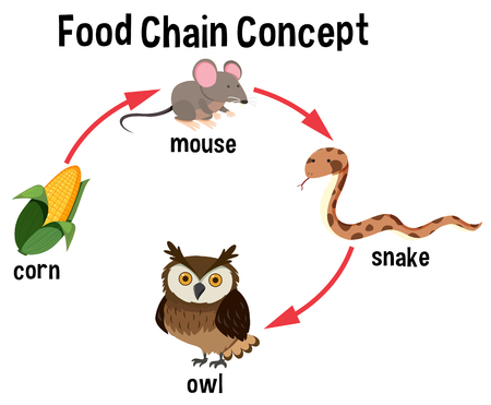 Food Chain concept diagram illustration