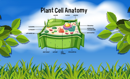 Plant cell anatomy in nature illustration Illustration