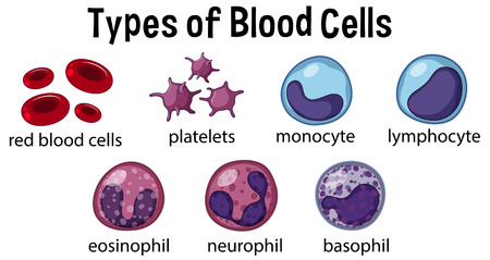 Types of Blood Cells illustration