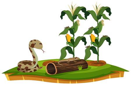 A snake and lizard near corn plant illustration