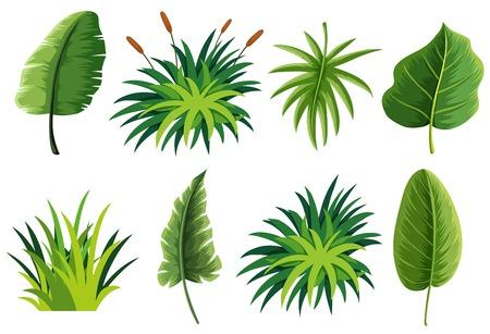 A set of nature leaf illustration