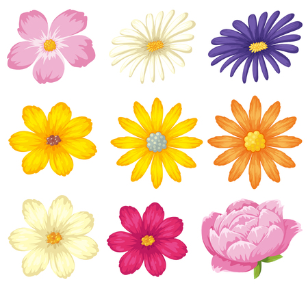 A set of beautiful flower illustration Ilustracja