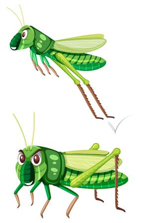 Grüner Gasshopper auf weißer Hintergrundillustration