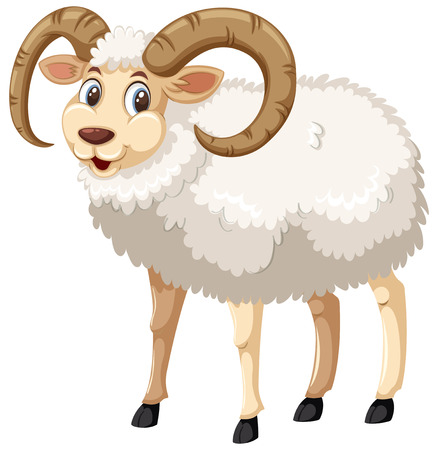 A whie male horn sheep on white background illustration Illustration