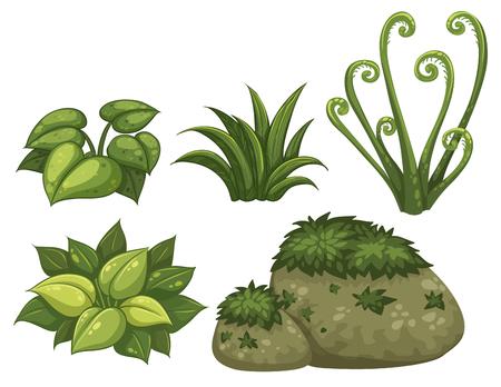 Satz Dschungelelementillustration Vektorgrafik