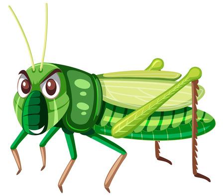 Eine grüne Heuschrecke auf weißer Hintergrundillustration Vektorgrafik