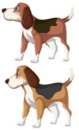 A set of beagle dog illustration