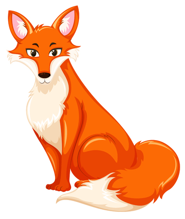 A red fox on white backgroud illustration