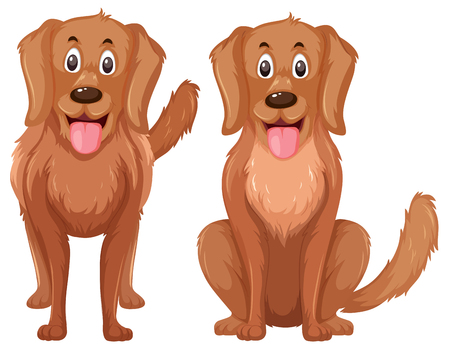 A set of golden retriever illustration