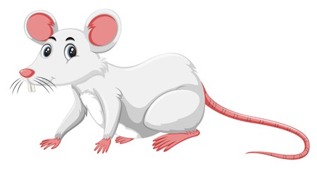 A white rat on white background illustration