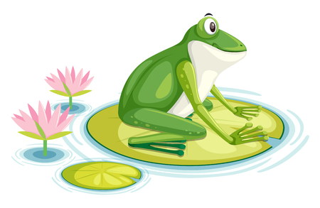 A frog on the lily pad  illustration