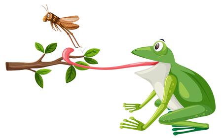 Ein Frosch versuchen, Heuschreckenillustration zu essen