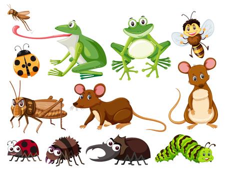 Conjunto de ilustración de animales e insectos.