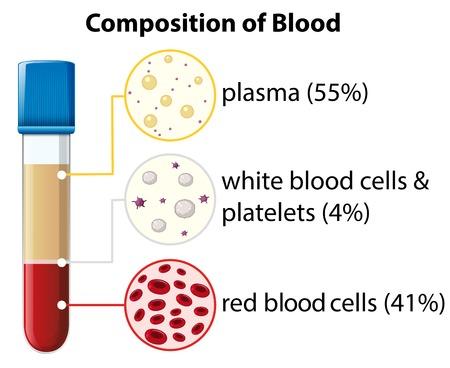 Composition of blood diagram illustration