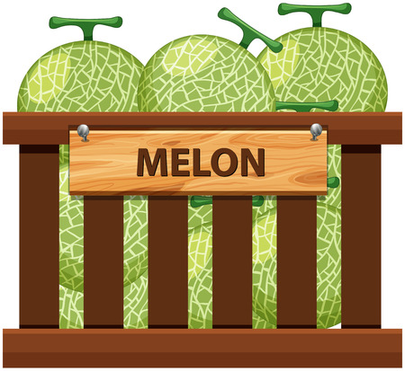 A crate of melon illustration Illustration