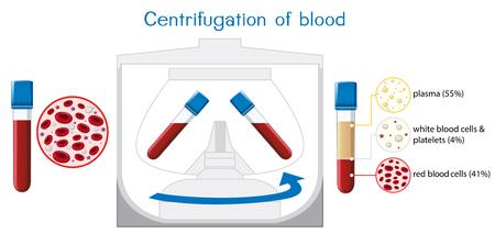 Centrifugation of blood diagram illustration