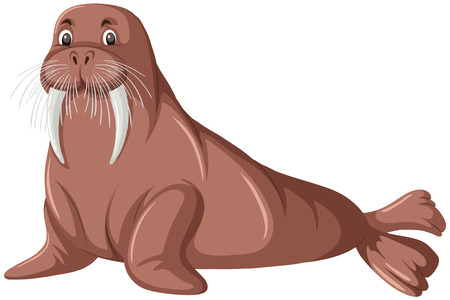 A walrus on white background illustration