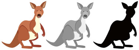 Set of kangaroo character illustration