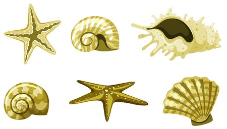 Set of isolated seashells in yellow color illustration