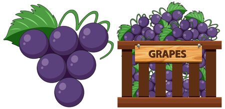 Grapes and a crate of grapes illustration
