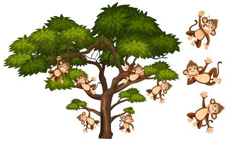 Big green tree and many monkeys on white background illustration