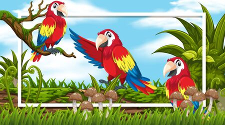 Frame design with three macaws in the woods background illustration  イラスト・ベクター素材