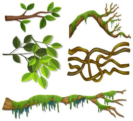 Satz verschiedene Zweige und Blätter auf weißer Hintergrundillustration Vektorgrafik