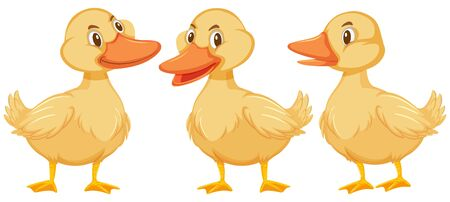 Three little ducklings on white background illustration Ilustração