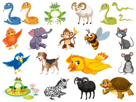 Large set of wild animals on white background illustration