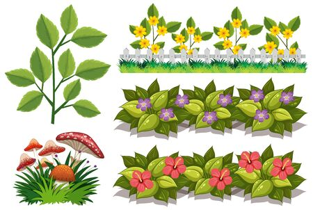 Large set of nature with flowers and leaves on white background illustration