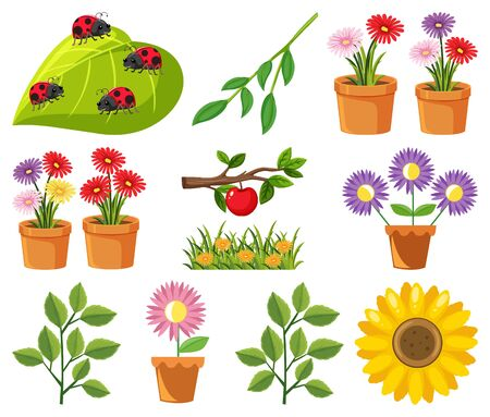 Large set of nature with flowers and leaves illustration