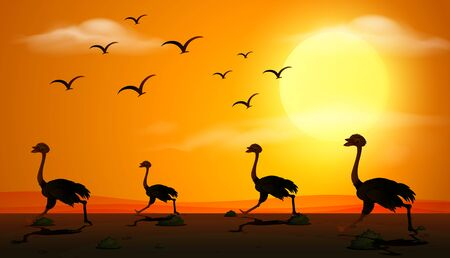 Silhouette scene with ostrich running at sunset illustration