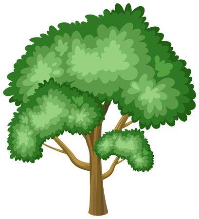 One big tree on white background illustration
