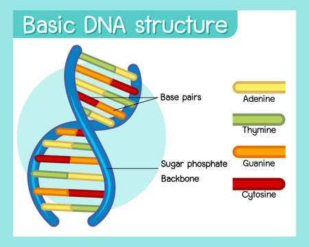 Science of basic DNA structure poster illustration