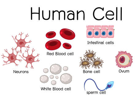 Set of different human cell illustration