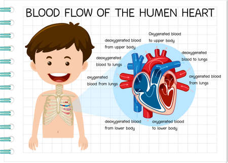 Diagram of Blood Flow of the Human Heart illustration