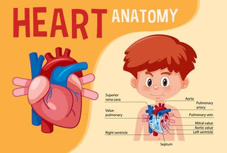 Information poster of human heart diagram illustration