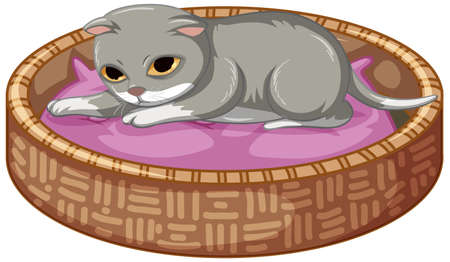 Grey kitten laying on his bed on white background illustration