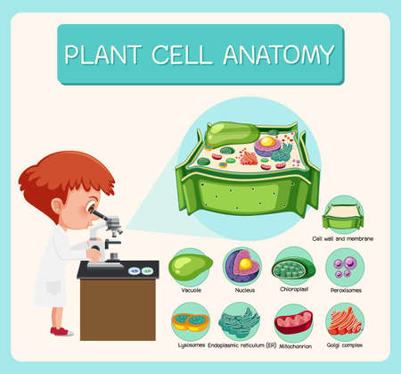 Anatomy of plant cell (Biology Diagram) illustration