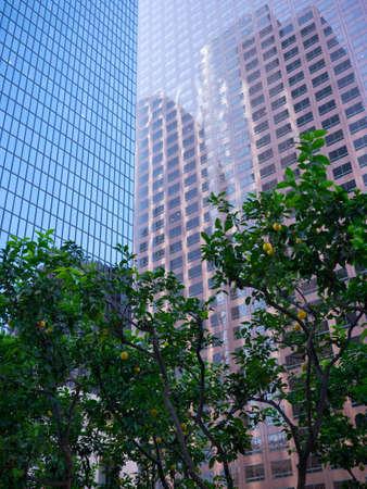 arbres fruitier: Urban arbres fruitiers dans la ville