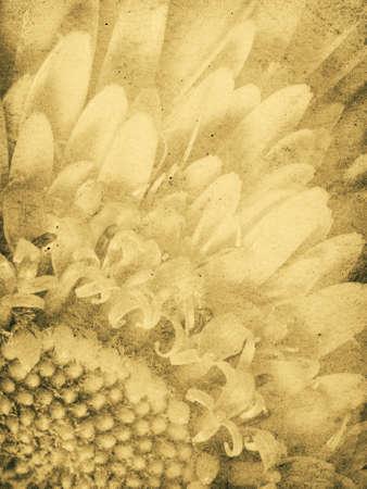 Vintage Daisy Detail Imprint