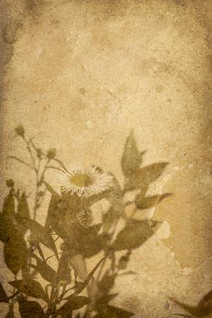 imprint: Vintage Flower Imprint Background