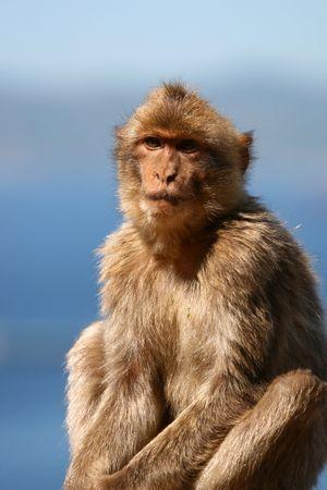 macaque: Portrait de macaque avec le ciel et l'oc�an en arri�re-plan flou. Prise de Gibraltar.
