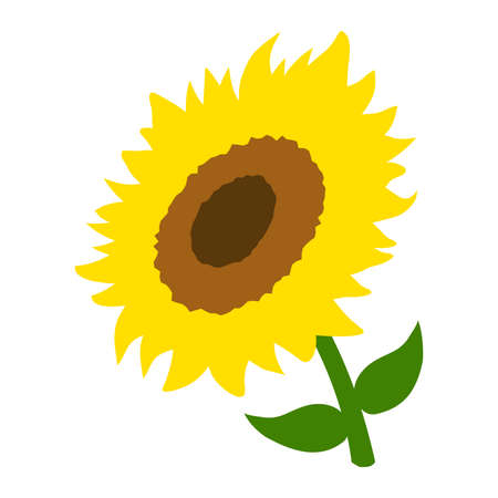Sunflower Vector Illustration